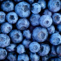 esults of a recent study from the University of Exeter show that concentrated blueberry juice improves brain function in older adults.