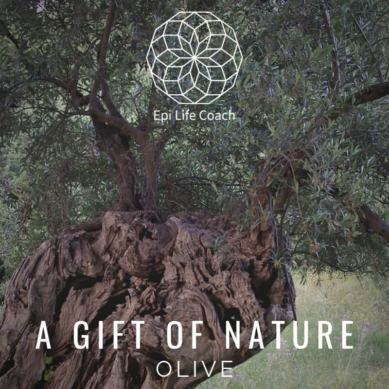 The many remedies derived from the olive tree