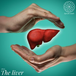 The liver, an essential gland in the body