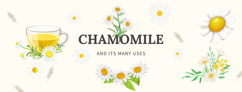 The virtues of chamomile